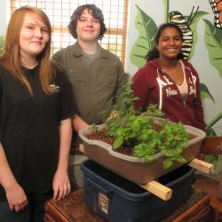 EcoRise Student Projects - Aquaponics