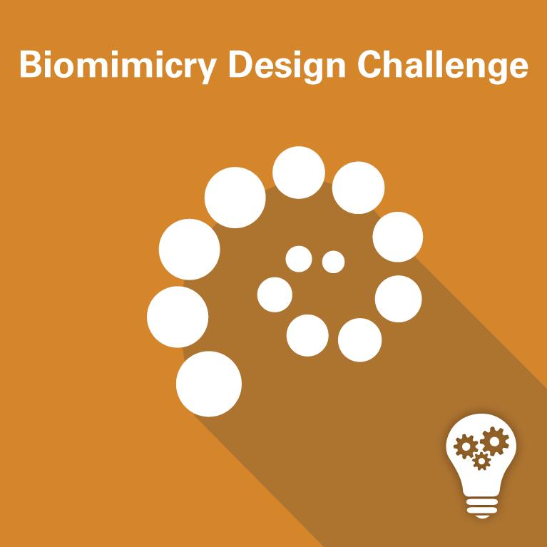 biomimicry design challenge